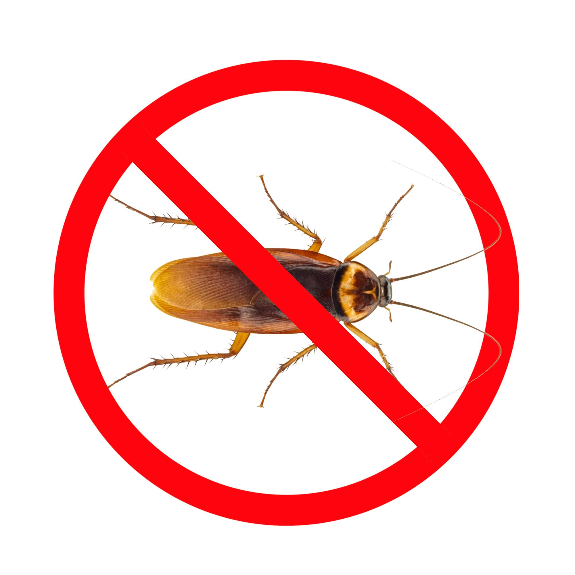 Pest Control Roaches